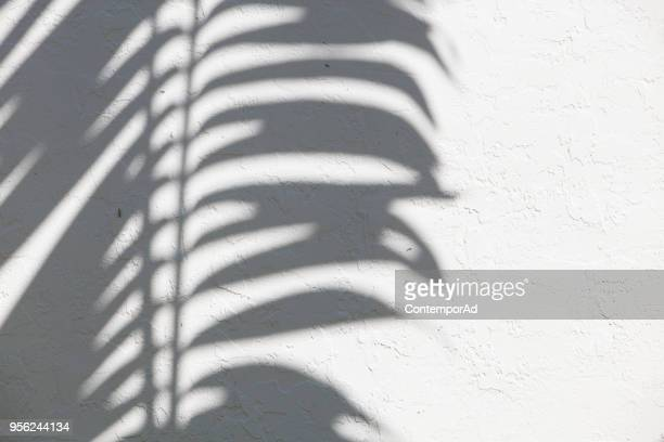 palm silhouette - shadow stock pictures, royalty-free photos & images
