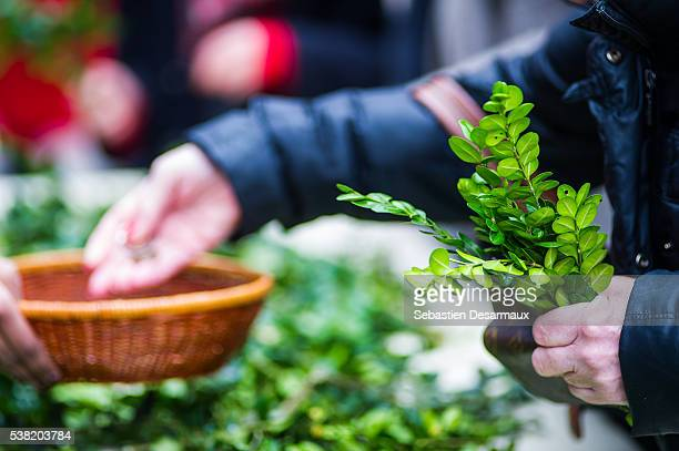 palm sunday. holy week. collection - palm sunday photos stock pictures, royalty-free photos & images