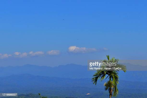 palm tree against blue sky - md rakibul hasan stock pictures, royalty-free photos & images