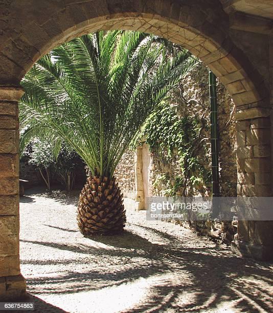 palm tree against building - collioure photos et images de collection