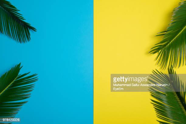 palm tree against clear blue sky - palm leaf stock pictures, royalty-free photos & images