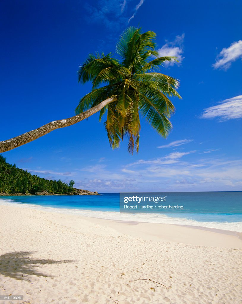 Palm tree and beach, Seychelles : Foto de stock