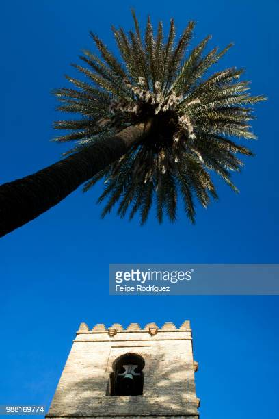 Palm tree and bell tower of Santa Catalina church (14th century), Seville, Spain