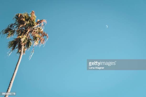 palm tree and crescent moon - hollywood los angeles ストックフォトと画像