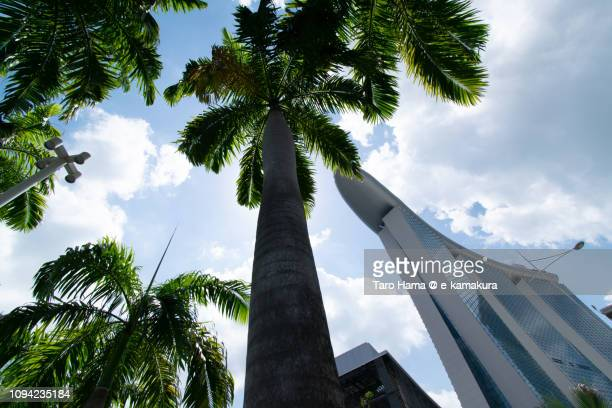 Palm tree and Marina Bay Sands in Singapore