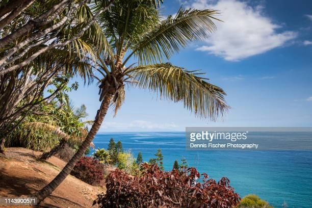 palm tree and ocean on an island - isla de tenerife fotografías e imágenes de stock