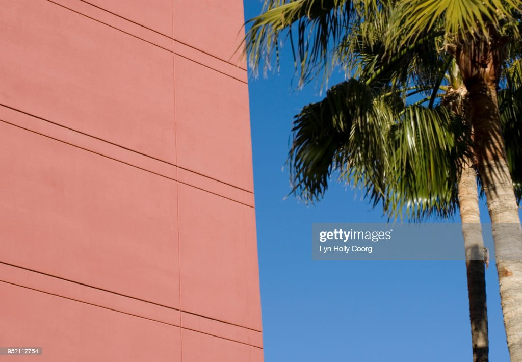 Palm tree and pink wall : Stock Photo