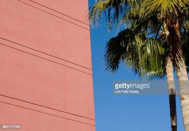 palm tree and pink wall - lyn holly coorg stock photos and pictures