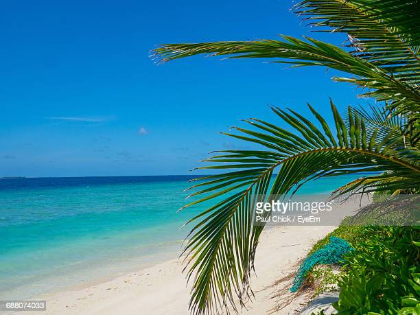 Palm Tree And Plants Growing At Beach Against Blue Sky