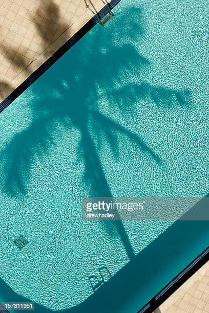 Palm tree and pool, birds eye-view.