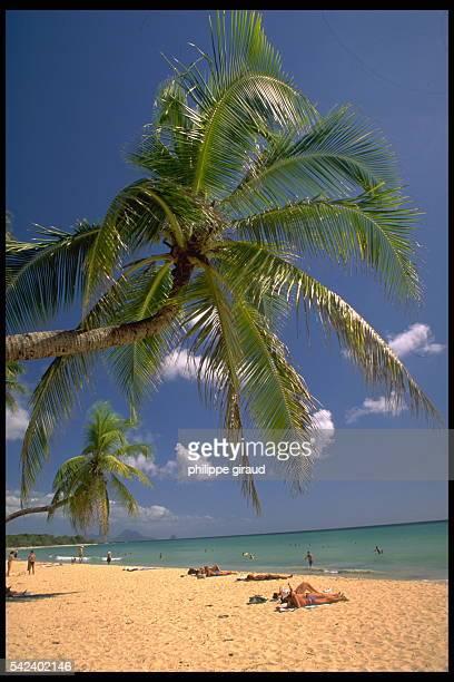 Palm tree and sandy beach on French Polynesian islands Wallis and Futuna