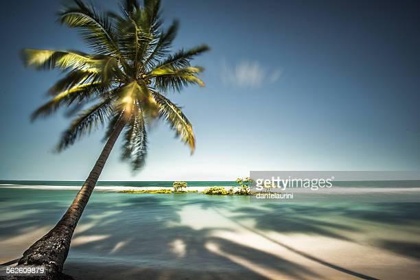 Palm Tree and shadows on a tropical beach, Praia dos Carneiros, Brazil