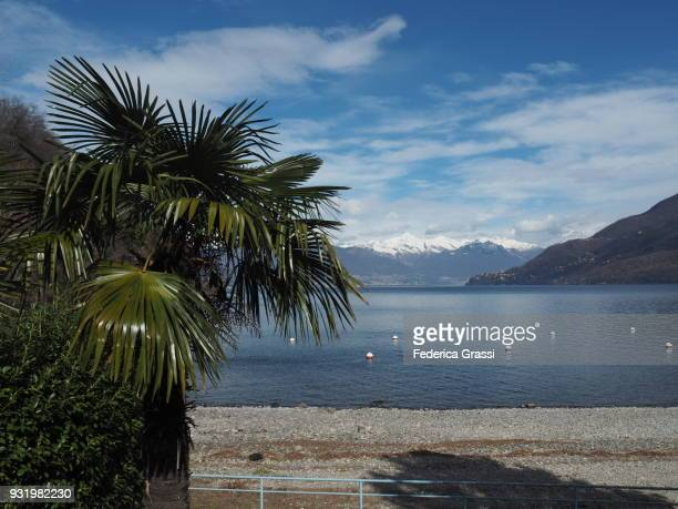 Palm Tree and Snow Capped Mountains