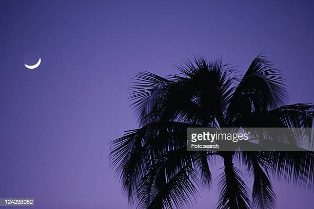 A Palm tree and the Moon, Low Angle View