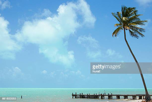 Palm tree and wooden jetty, Mexico