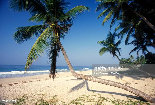 Palm tree blue sky getty images palm tree at beach against sky voltagebd Image collections