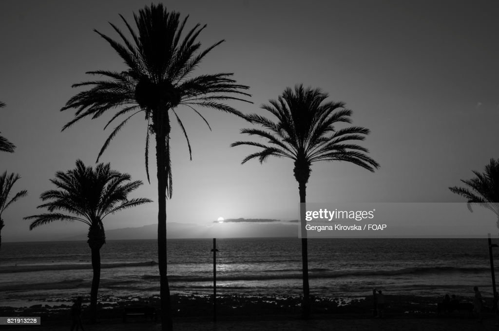 Palm tree at beach during sunset : Stock Photo