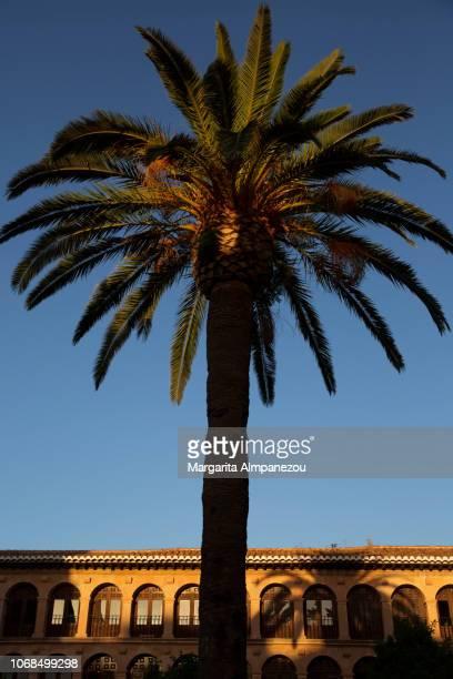 Palm tree at Ronda's Old Town main square