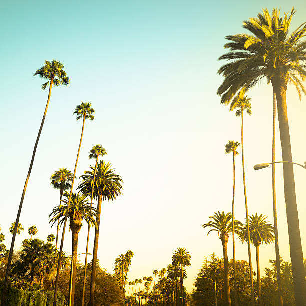 """Palm tree at sunset on Beverly Hills, California - USA"""
