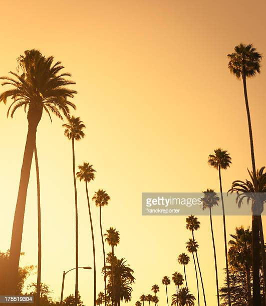 palm tree at sunset on beverly hills, california - usa - hollywood california stock pictures, royalty-free photos & images