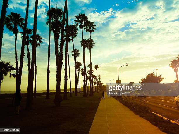 Palm tree at sunset on California - USA