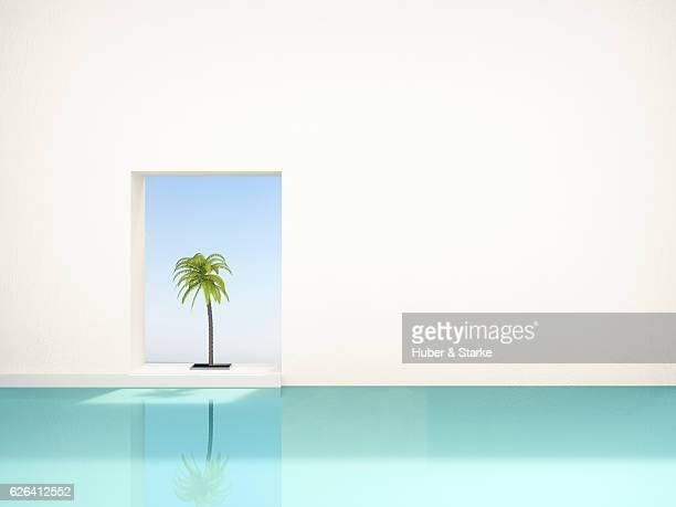 palm tree at swimming pool