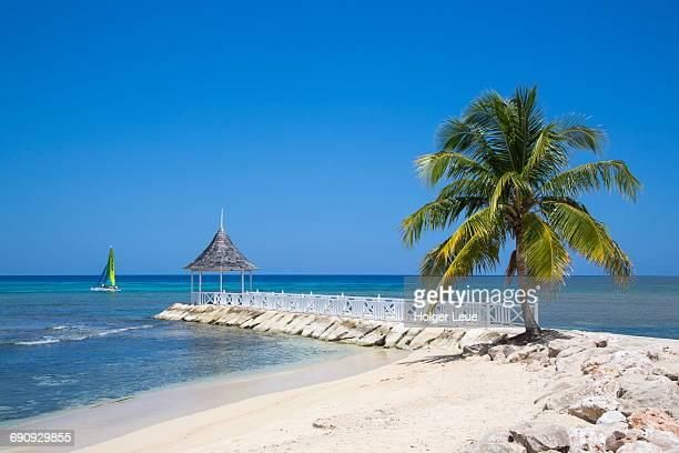 Palm tree, beach and pavillion at Half Moon Resort