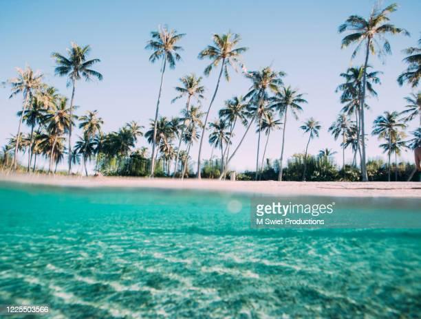 palm tree beach - ボラボラ島 ストックフォトと画像