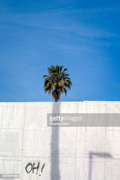 palm tree behind a wall - oakland california stock pictures, royalty-free photos & images