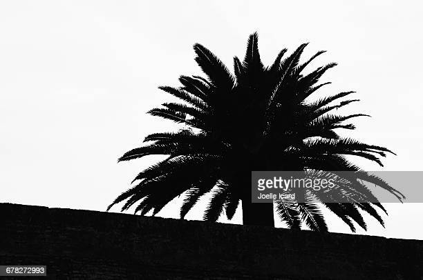 palm tree behind a wall