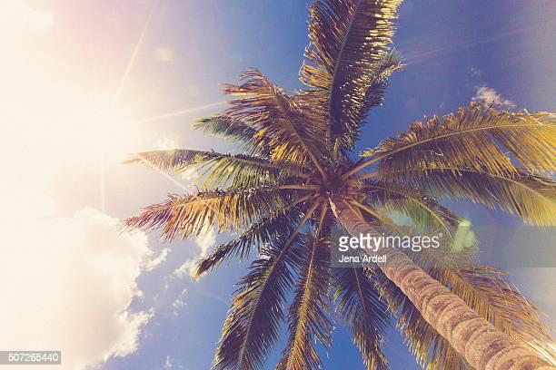 Palm Tree Blue Sky Solar Flare