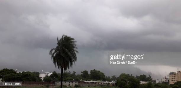 palm tree by buildings against cloudy sky - panchkula stock pictures, royalty-free photos & images