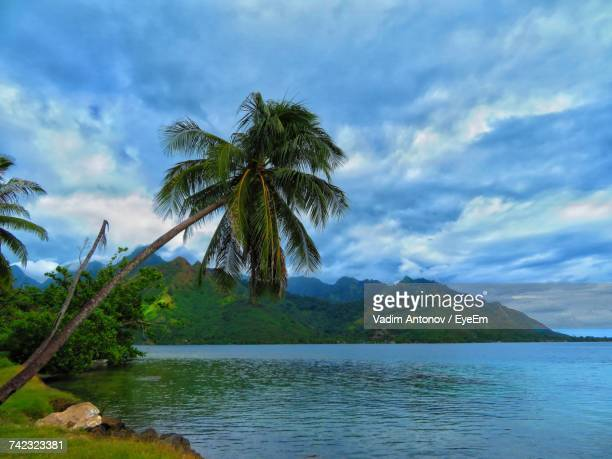 palm tree by lake against sky - antonov stock pictures, royalty-free photos & images