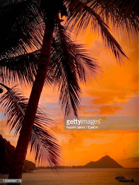 palm tree by sea against sky during sunset - naomi jarvis stock pictures, royalty-free photos & images