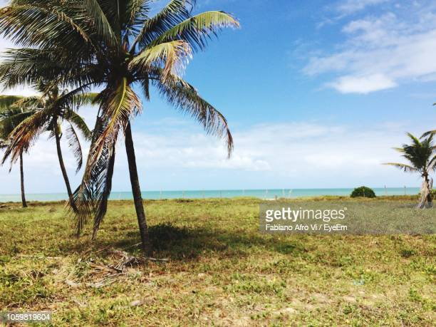 palm tree by sea against sky - porto galinhas stock photos and pictures
