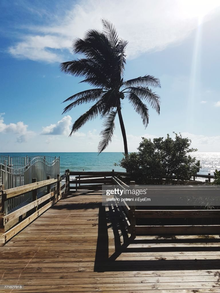 Palm Tree By Sea Against Sky : Stock Photo