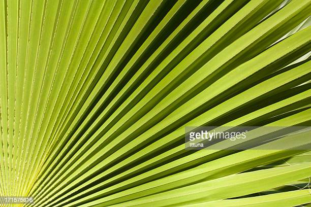 palm tree, creative abstract design background photo