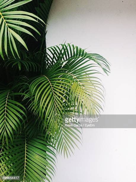 Palm Tree Growing Against Wall