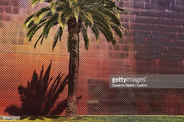 Palm Tree Growing By Wall At Golden Gate Park