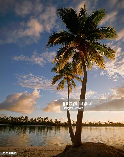A palm tree grows on the beach of Tetiaroa an island in French Polynesia that is owned by American actor Marlon Brando