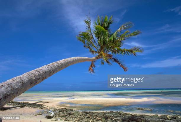 Palm Tree Hanging Over Beach on Laura Island