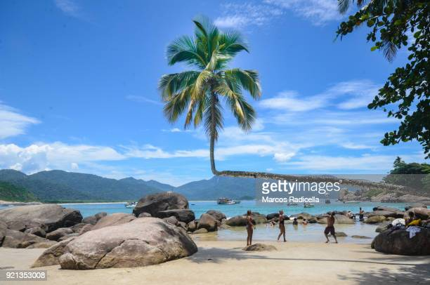 palm tree hangs over aventureiro beach on ilha grande. - radicella stock photos and pictures