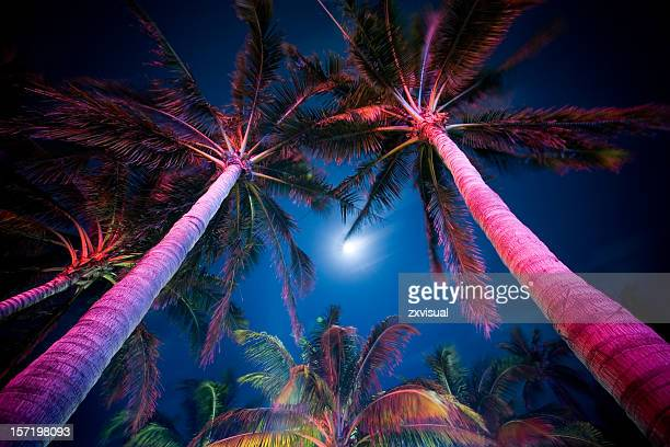 Palm Tree Illumination