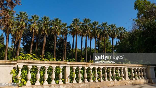 Palmeira em uma linha um nível nacional jardim Atenas, Grécia