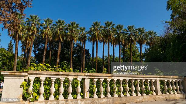 palm tree in a row at national garden athens, greece - national landmark stock pictures, royalty-free photos & images