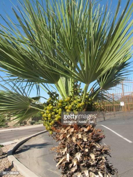 A Palm Tree In Arizona