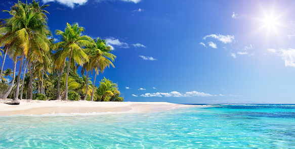 Palm tree In Beach In Tropical Island -  Caribbean - Guadalupe 955765580