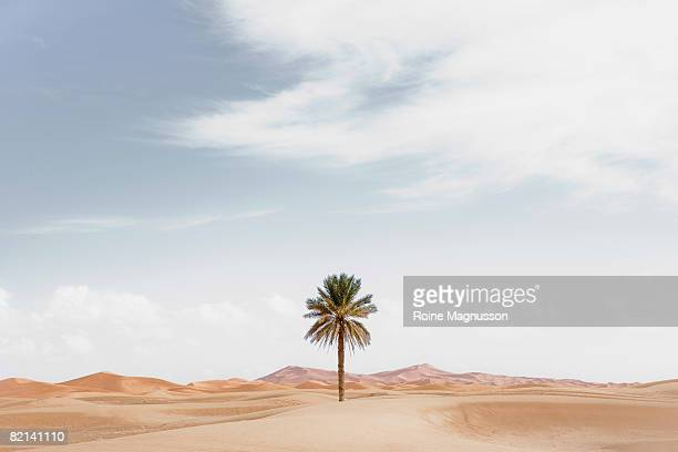 Palm tree in desert landscape