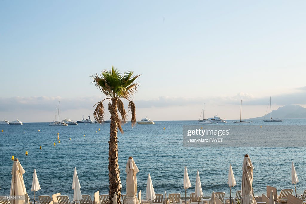Palm tree in front of Cannes' beach and its sun shade : Photo