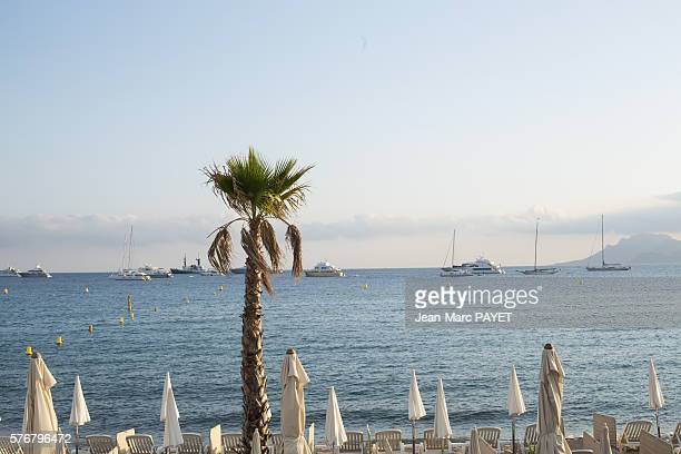 Palm tree in front of Cannes' beach and its sun shade